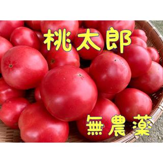 トマトの王様❗☆桃太郎☆  無農薬(野菜)