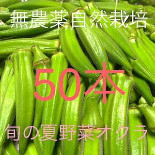 広島県産 新鮮夏野菜 鮮度抜群 朝採り&夕採 旬の夏野菜一袋オクラ50本セット(野菜)
