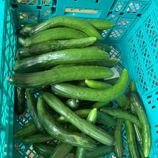 きゅうり 3kg(野菜)