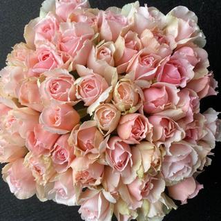 バラ 切り花 エレガントドレス(ミルキーピンク)50本 30センチ(その他)