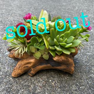 ★★モリモリ❤️豪華★切り株★寄せ植え★このまま飾れます★多肉植物(その他)