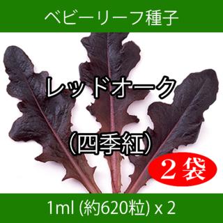 ベビーリーフ種子 B-04 レッドオーク(四季紅) 1ml 約620粒 x 2袋(野菜)