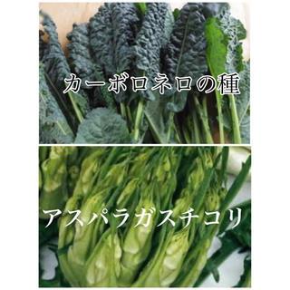 カーボロネロとアスパラガスチコリの種(野菜)
