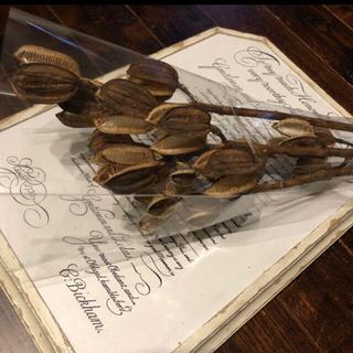 ドライフラワー ウバユリの殻 北海道花材(ドライフラワー)