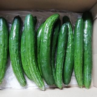朝採りきゅうり(野菜)