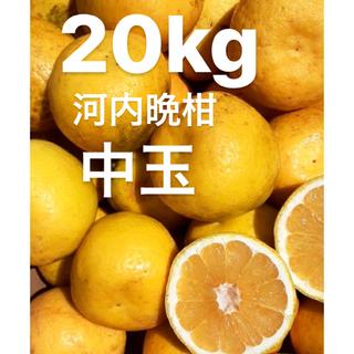 こぐま様専用 宇和ゴールド20Kg   河内晩柑 愛媛 みかん(フルーツ)