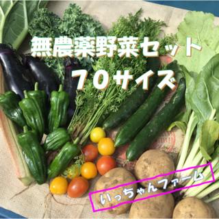 初夏を感じる野菜セット 70サイズ 【クール便】 (野菜)