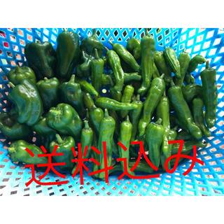 即日発送 新鮮野菜 無農薬 ししとう ピーマン 詰め合わせBOX(野菜)