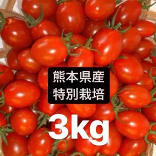特別栽培アイコミニトマト3キロ(野菜)