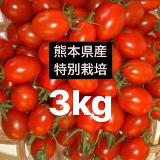 アイコミニトマト3キロ(野菜)