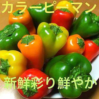 ☆数量限定☆広島県産無農薬自然栽培 色彩り鮮やか新鮮野菜カラーピーマンセット(野菜)