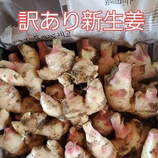 高知県産 訳あり新生姜 コンパクトボックス(野菜)