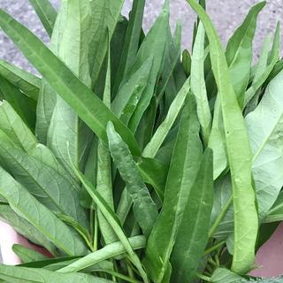 無農薬家庭農園 野菜 空芯菜 A4袋の1袋(野菜)