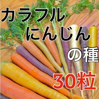 【黄・橙・紫‼️】カラフルにんじんの種 30粒 MIX ニンジン 人参 野菜 種(野菜)