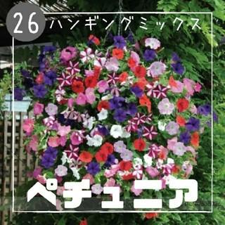 【ペチュニア㉖】ハンギングミックス 種子30粒  (その他)