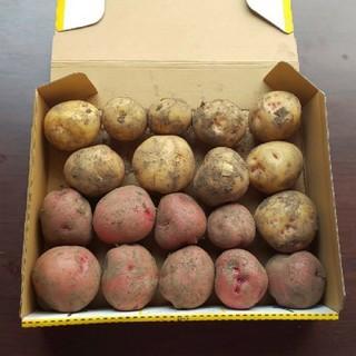 ジャガイモ 2品種(野菜)