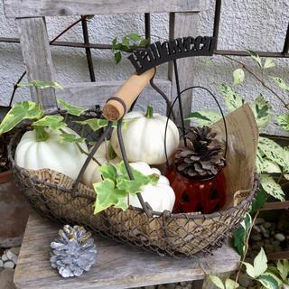 白かぼちゃ 4個★ハロウィン(野菜)