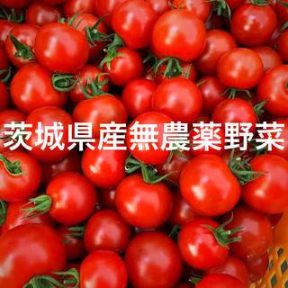 夏野菜詰め合わせセット(野菜)