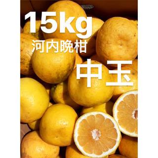 宇和ゴールド15Kg   河内晩柑 愛媛 みかん(フルーツ)