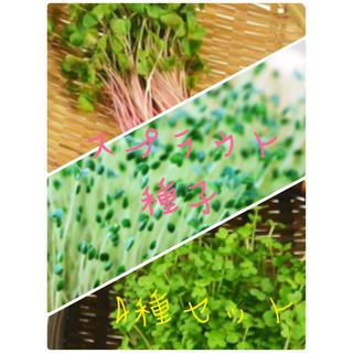 ★有機種子★固定種 スプラウト種子セット(野菜)
