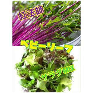 ベビーリーフの種100粒 無農薬(野菜)
