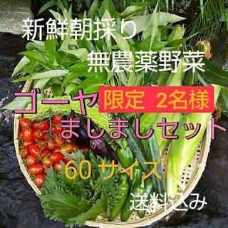 野菜箱詰め【野菜おまかせ♪野菜お試しセット】無農薬野菜  ゴーヤましましセット (野菜)