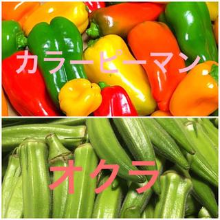 広島県産 新鮮旬の夏野菜 カラーピーマン&オクラセット(野菜)