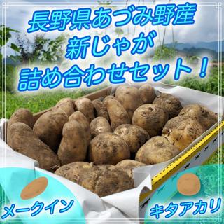 じゃがいも 新じゃが 無農薬 夏野菜 長野県あづみ野産(野菜)