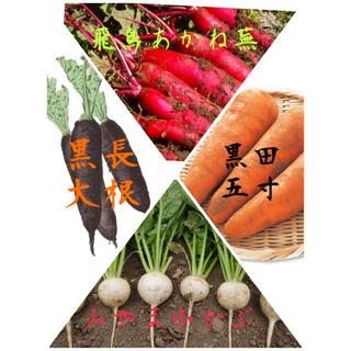 ★伝統野菜★種セット根菜(野菜)
