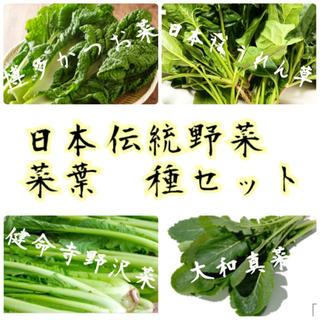 ★日本伝統菜葉★固定種の種セット(野菜)