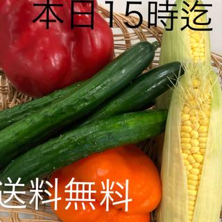 ★60サイズ❗️送料無料◆今日の野菜詰め合わせ(野菜)
