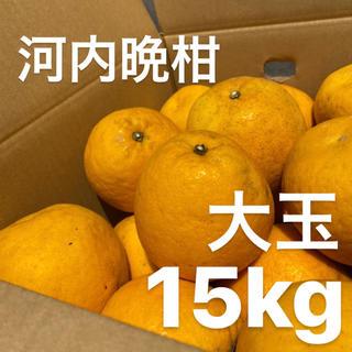 大玉 宇和ゴールド 15Kg  河内晩柑 愛媛 みかん(フルーツ)