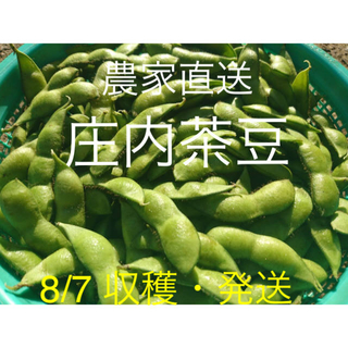 ⭐︎新鮮!!朝採り庄内茶豆 A品 1kg 8/7 ⑤ 枝豆 だだちゃ豆(野菜)