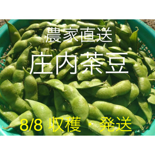⭐︎新鮮!!朝採り庄内茶豆 A品 1kg 8/8 ⑥ 枝豆 だだちゃ豆(野菜)