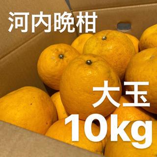 大玉 宇和ゴールド 10Kg  河内晩柑 愛媛 みかん(フルーツ)