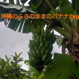沖縄の黄輝バナナのふさ 2kg(フルーツ)