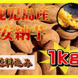 鹿児島産 安納芋 約1kg(貯蔵済み)(野菜)