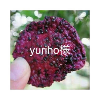 yuriho様(フルーツ)