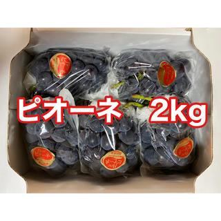 朝採れ!岡山県産ピオーネ2kg(4〜5房)2箱(フルーツ)