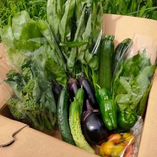 農薬不使用 野菜セット 中(野菜)