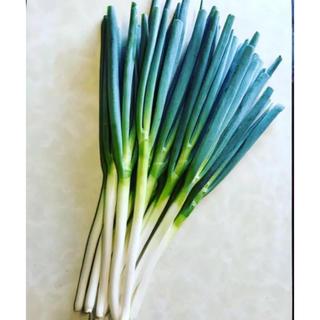 石川県産⭐︎農家直送 白ネギ10本セット(野菜)