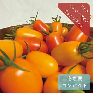 アイコ、イエローアイコ、オレンジアイコ 約1.1kg 無農薬栽培ミニトマト(野菜)