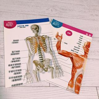 プチナース付録 解剖ポスター(専門誌)