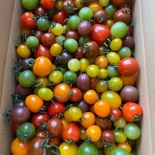 カラフルミニトマト2キロ 2(野菜)