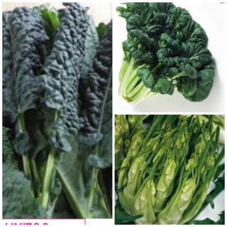 カーボロネロ50粒、ターサイ50粒、アスパラガスチコリ50粒(野菜)