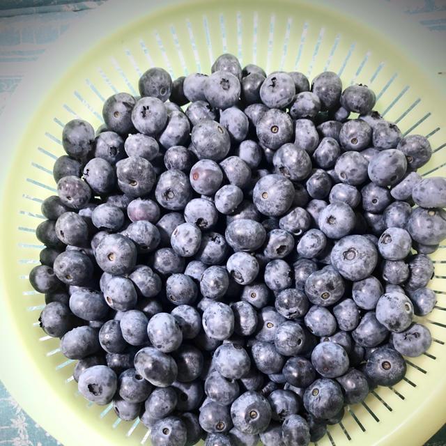 購入前にコメントお願い致します🌸様 専用 群馬県産 冷凍ブルーベリー5キロ 食品/飲料/酒の食品(フルーツ)の商品写真