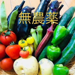 朝採れ 無農薬野菜セット(野菜)