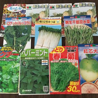 秋野菜の種 6種(野菜)