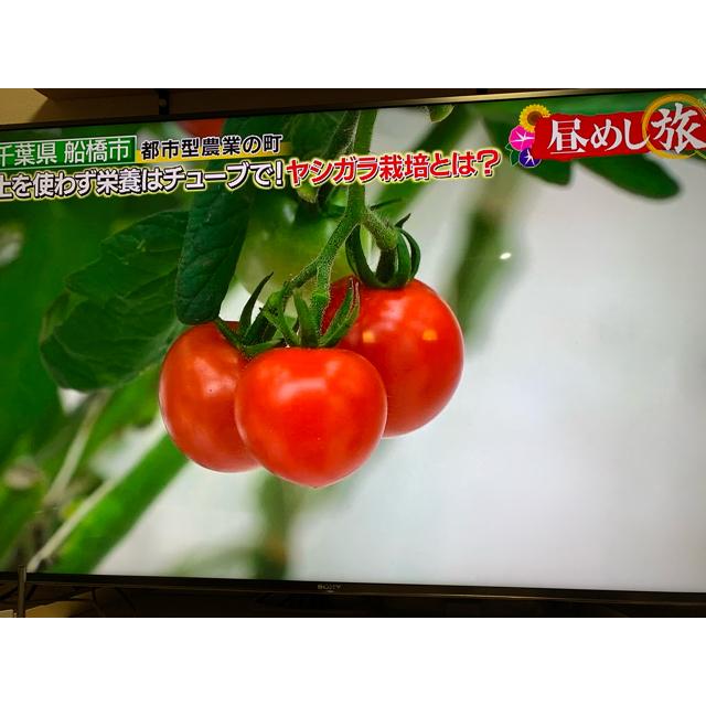 朝採り夏野菜セット お野菜6〜7種類(そのうちトマト2〜3種類) 食品/飲料/酒の食品(野菜)の商品写真