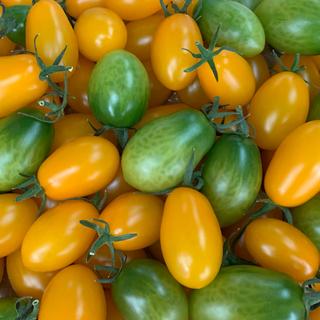 プレミアムカクテルトマト1.8キロ(野菜)